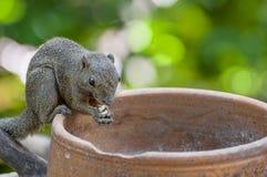 Squirrel Portrait Stock Image