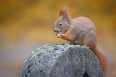 A squirrel poses Stock Photo
