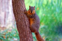 Squirrel posing Stock Photo