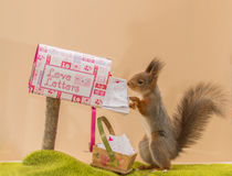 The squirrel postman Stock Image