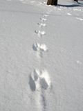 Squirrel Prints in Snow. Squirrel paw prints in fresh snow on his way to a bird feeder Royalty Free Stock Photo