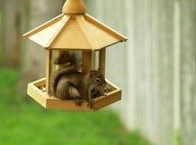 Squirrel raiding the feeder. A small squirrel raids a bird feeder stock photo