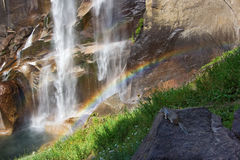 squirrel rainbow and waterfall Royalty Free Stock Photography