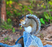 Squirrel on rock turned sideways in center Stock Photo