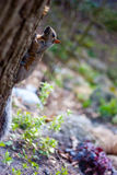 Squirrel running through the woods Royalty Free Stock Image