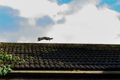 Squirrel runs on the roof. Sky Stock Image