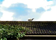 Squirrel runs on the roof. Sky Royalty Free Stock Photos