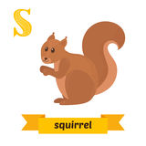 Squirrel. S letter. Cute children animal alphabet in vector. Fun Royalty Free Stock Photos