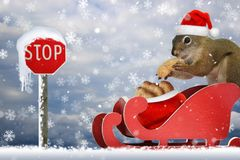 Squirrel in santa`s sleigh at the north pole Stock Images