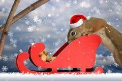 Squirrel in Santa Sleigh Immagini Stock Libere da Diritti