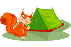 Squirrel sets tent Royalty Free Stock Image