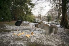 Squirrel Sheffield Botanical Gardens South Yorkshire December 20 Stock Photos