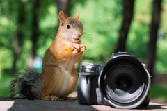 Squirrel and camera Royalty Free Stock Image