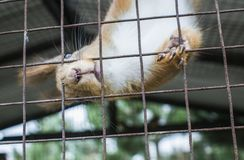 The squirrel sits in a cage. Royalty Free Stock Photos