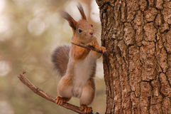 The squirrel sits on a tree Stock Images