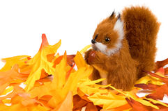 Squirrel sitting in autumn leaves Stock Image