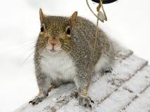 Squirrel Sitting on Feeder