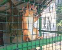 Squirrel in the cell stock image