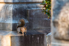 Squirrel sitting on tombstone Stock Photography