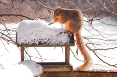 Squirrel Sitting On Top of a Bird Feeder Royalty Free Stock Photography