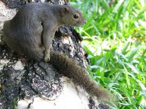 Squirrel, Sitting, Tree, Cute Stock Photography