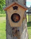 Squirrel sitting in a tree house royalty free stock images