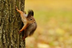 Squirrel sitting on a tree Stock Photo
