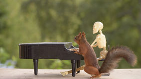 Squirrel and a skeleton behind a piano Stock Photo