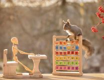 Squirrel with skeleton and a desk with capitals. Red squirrel with a skeleton and a desk with capitals Stock Images