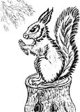 Squirrel Sketch Royalty Free Stock Images