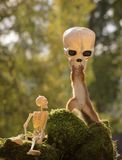 Squirrel with skull mask and skeleton Stock Photos