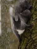 Squirrel on Snow Royalty Free Stock Photos