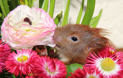 Squirrel among some flowers Royalty Free Stock Images