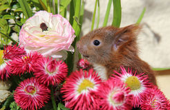 Squirrel among some flowers Stock Photo