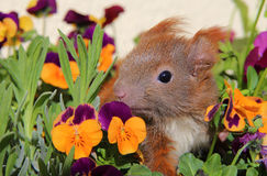 Squirrel among some flowers Stock Image