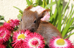Squirrel among some flowers Royalty Free Stock Photo