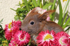 Squirrel among some flowers Stock Images