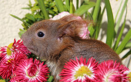 Squirrel among some flowers Royalty Free Stock Photography