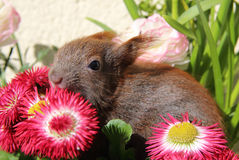 Squirrel among some flowers Stock Photography