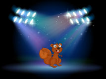 A squirrel at the stage with spotlights Royalty Free Stock Photo