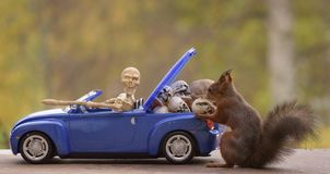 Squirrel standing behind  a car with a skeleton Stock Image