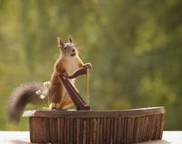 Squirrel standing behind a harp Royalty Free Stock Image