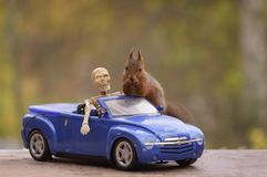 Squirrel standing on a car with a skeleton Stock Image