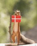 Squirrel standing with a Danish flag. Red squirrel is standing with a Danish flag Royalty Free Stock Photo