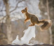 Squirrel standing on a ice fish Royalty Free Stock Images