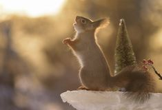 Squirrel standing on ice reaching out Stock Photo