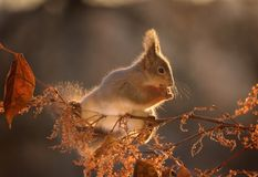 Squirrel stands on branches in sunlight Stock Photos