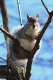 A squirrel staring at me. Show off I front of my camera in Washington DC stock photography