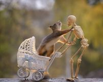 Squirrel in a stroller touching a skeleton Royalty Free Stock Photo