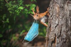Squirrel with a surgical face mask.